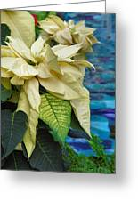 Creamy Poinsetta Greeting Card by Steven Ainsworth