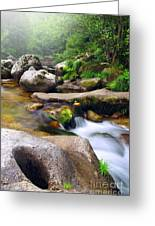 Creek Greeting Card by Carlos Caetano