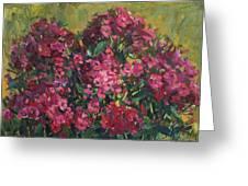 Crimson Phloxes Greeting Card by Juliya Zhukova