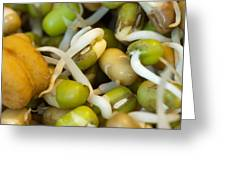Cross Section Of Some Healthy Sprouts Greeting Card by Ashish Agarwal