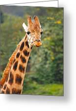 Curious Giraffe Greeting Card by Naman Imagery