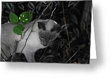Curious Kitty Greeting Card by Rani De Leeuw