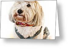 Cute dog in Halloween cowboy costume Greeting Card by Elena Elisseeva