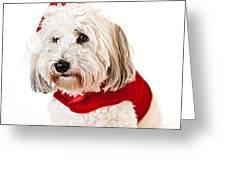 Cute dog in Santa outfit Greeting Card by Elena Elisseeva