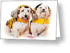 Cute Dogs In Halloween Costumes Greeting Card by Elena Elisseeva