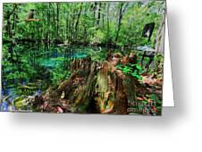 Cypress Stump At Buford Spring Greeting Card by Barbara Bowen