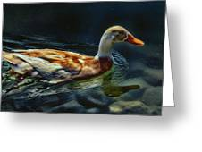 Dabbling In Blue Waters Greeting Card by Bill Tiepelman