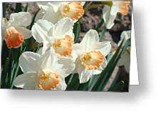 Daffodil Flowers Art Prints Spring Floral Greeting Card by Baslee Troutman