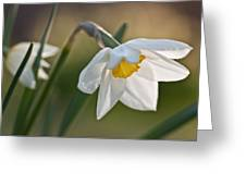 Daffodil Greeting Card by Ron Smith