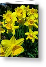 Daffodils 2010 Greeting Card by Anna Villarreal Garbis