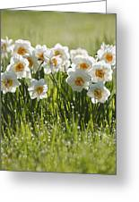 Daffodils In The Dew Covered Grass Greeting Card by Susan Dykstra