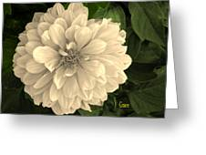 Dahlia Beauty Greeting Card by Julie  Grace