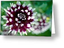 Dahlia Greeting Card by Marcio Faustino