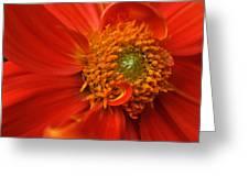 Dahlia Persuasion Greeting Card by Kathy Yates