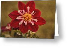 Dahlia Greeting Card by Sandy Keeton