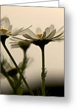 Daisies Dream Of Flying Greeting Card by Odd Jeppesen
