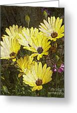 Daisy Daisy Greeting Card by Tom Romeo