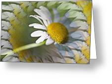 Daisy Delight Greeting Card by Cheryl Cencich