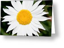 Daisy Face Greeting Card by Christopher McPhail