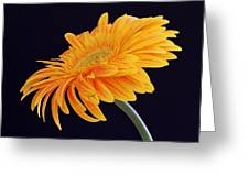 Daisy Of Joy Greeting Card by Juergen Roth