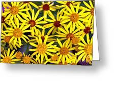 Daisys  Greeting Card by Kami McKeon