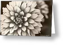 Daliha Dreams Greeting Card by Artist and Photographer Laura Wrede