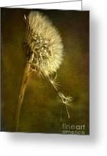 Dance Dandelions Dance Greeting Card by Sari Sauls