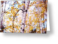 Dancing Birches Greeting Card by Jenny Rainbow