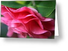 Dancing Petals Of The Camellia Greeting Card by Enzie Shahmiri
