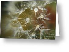Dandelion Seeds Greeting Card by Yumi Johnson