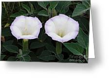 Datura Greeting Card by Robert Hooper