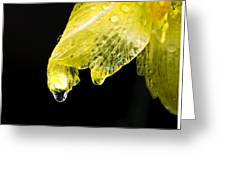 Day Lilly Drop Greeting Card by Vicki Jauron