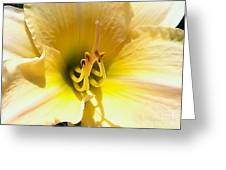 Day Lilly Macro Greeting Card by Elizabeth Coats
