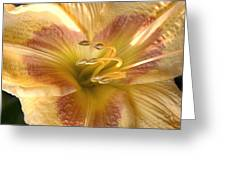 Day Lilly Greeting Card by Rich Lightfoot