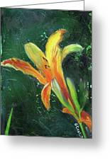 Day Lily Number Two Greeting Card by Gary Deslauriers