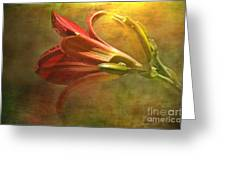 Daylily Photoart With Texture II Greeting Card by Debbie Portwood