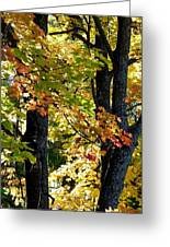 Dazzling Days Of Autumn Greeting Card by Will Borden