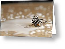 Dead Fly On Milk Drops Greeting Card by Sami Sarkis