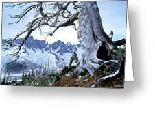 Dead Spruce In Old Forest Fire, Nabob Greeting Card by David Nunuk