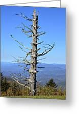 Dead Tree Greeting Card by Susan Leggett