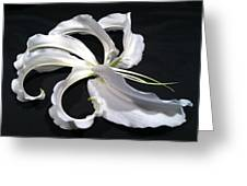 Deconstructed Lily Greeting Card by Anna Villarreal Garbis