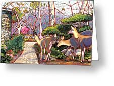 Deer In Baer Garden Greeting Card by Nadi Spencer