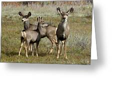 Deer In Southern Colorado Greeting Card by D Winston