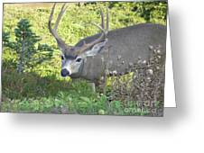 Deer Without Headlights Greeting Card by Silvie Kendall