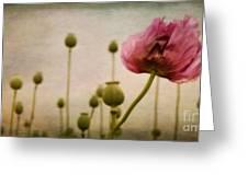 Depth Of Poppy Field Greeting Card by Priska Wettstein