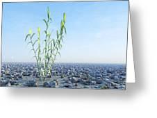 Desert Plant, Artwork Greeting Card by Carl Goodman