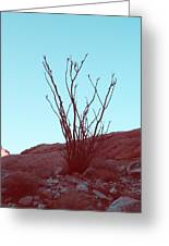 Desert Plant Greeting Card by Naxart Studio