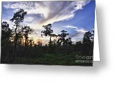 Destrehan Swamp Sunset Greeting Card by Jeanne  Woods