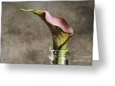 Dew Of A Lily Greeting Card by Darren Fisher