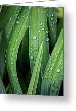 Dew To You Greeting Card by Jerry Cordeiro
